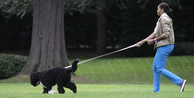 Michelle Obama, Bo Obama