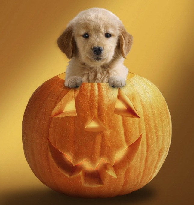 halloween-puppy-wallpaper-desktop-1251-hd-wallpapers