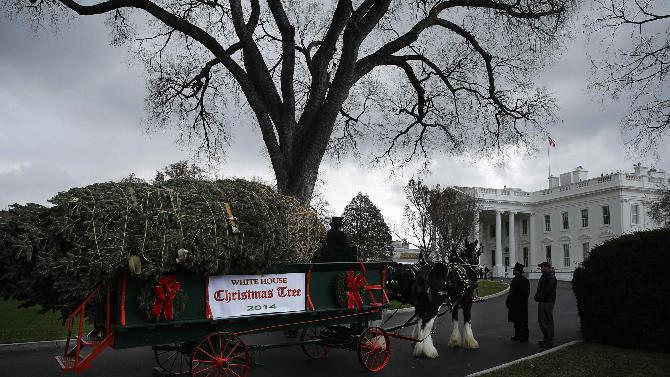 2014-11-28T162552Z_1490925899_GM1EABT00ZG01_RTRMADP_3_USA-WHITEHOUSE-CHRISTMASTREE