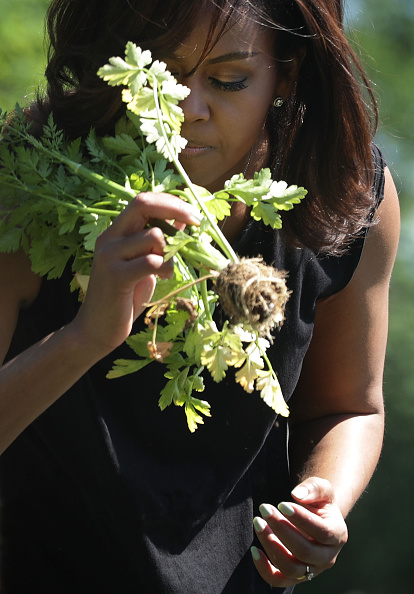 WASHINGTON, DC - JUNE 06: U.S. first lady Michelle Obama participates in a White House Kitchen Garden harvest June 6, 2016 at the White House in Washington, DC. The first lady welcomed back students from the kitchen garden planting earlier in spring to help the harvest today. (Photo by Alex Wong/Getty Images)