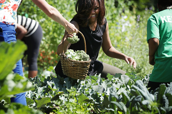 WASHINGTON, DC - JUNE 06: U.S. first lady Michelle Obama participates in a White House Kitchen Garden harvest with students June 6, 2016 at the White House in Washington, DC. The first lady welcomed back students from the kitchen garden planting earlier in spring to help the harvest today. (Photo by Alex Wong/Getty Images)